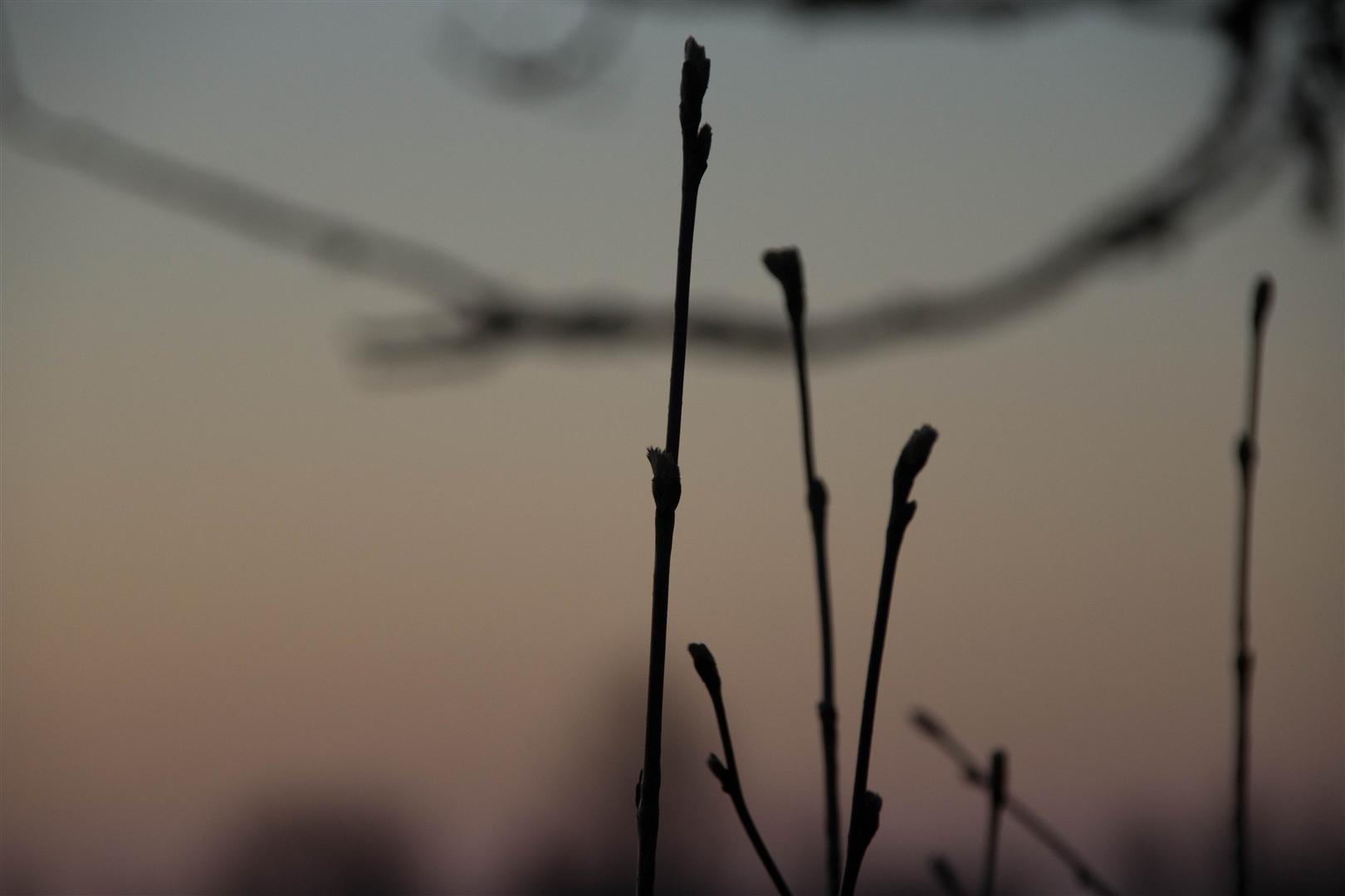 morgon på hästängen-2 (Large)