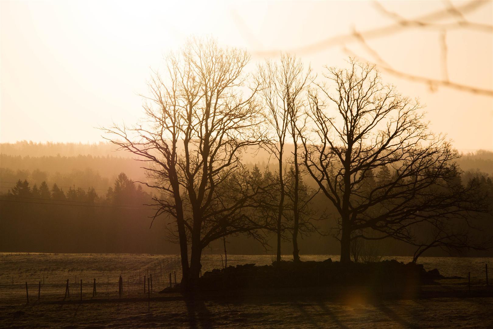 morgon på hästängen-32 (Large)